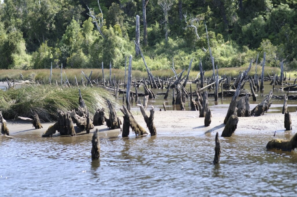 Punting the Chepu river and the sunken forest